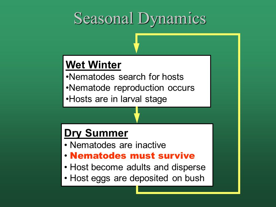 Seasonal Dynamics Wet Winter Nematodes search for hosts Nematode reproduction occurs Hosts are in larval stage Dry Summer Nematodes are inactive Nematodes must survive Host become adults and disperse Host eggs are deposited on bush