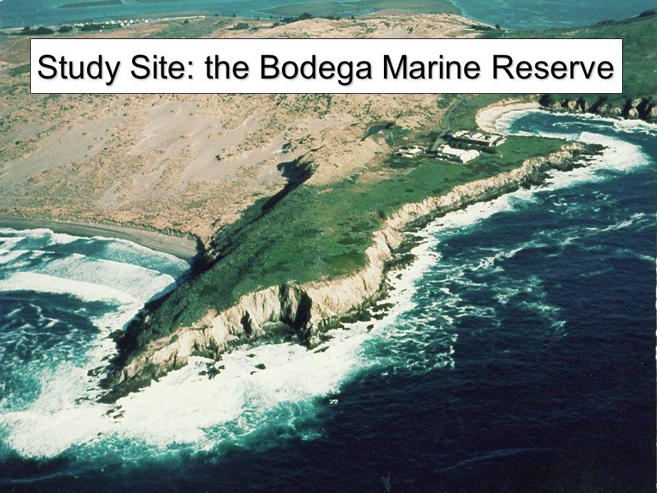 Study Site: the Bodega Marine Reserve