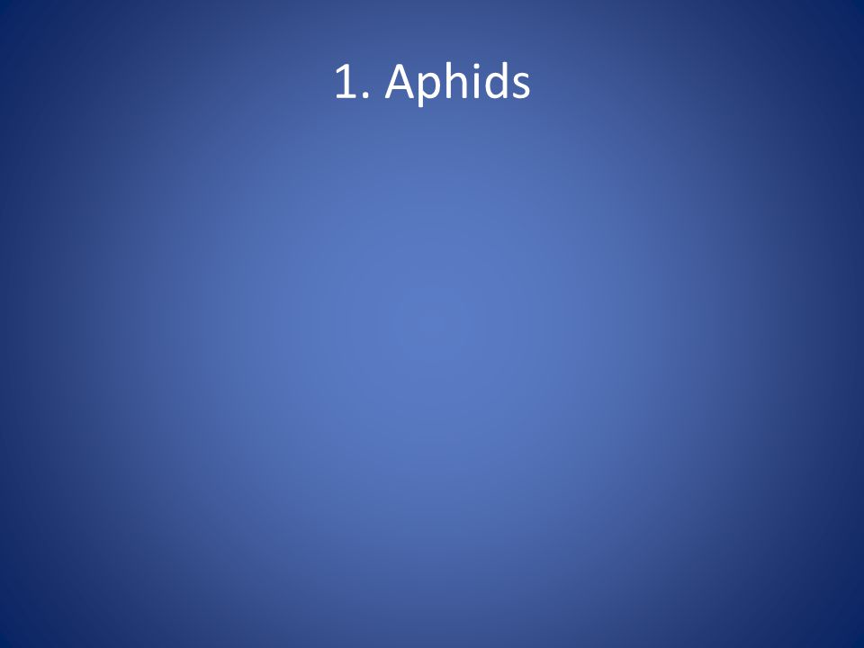 1. Aphids