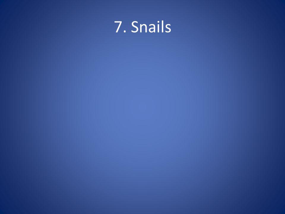 7. Snails