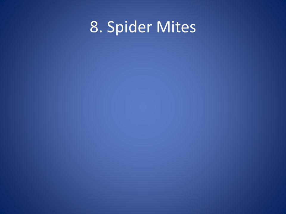 8. Spider Mites