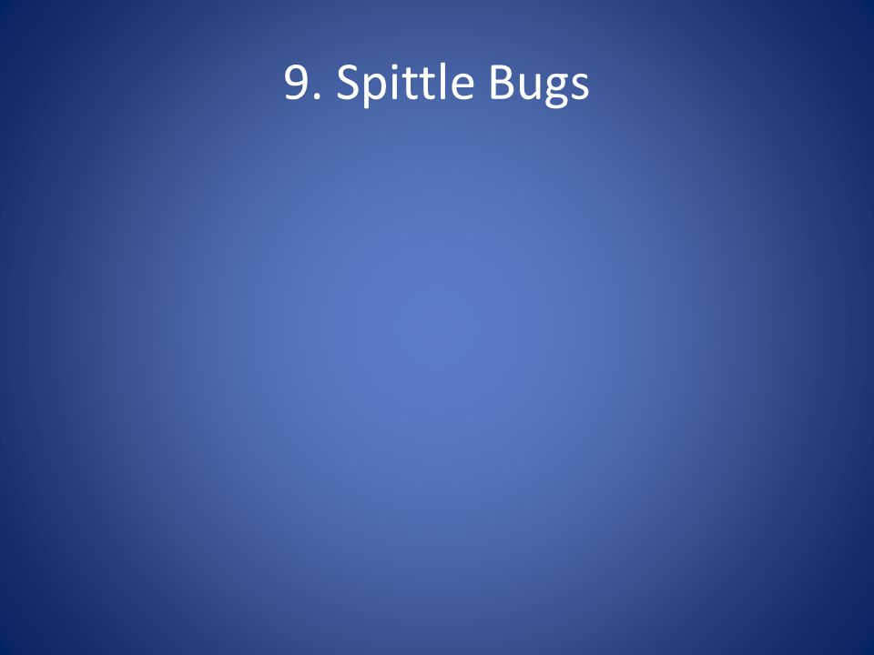 9. Spittle Bugs