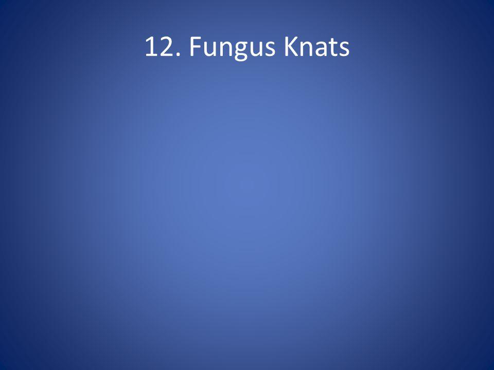 12. Fungus Knats