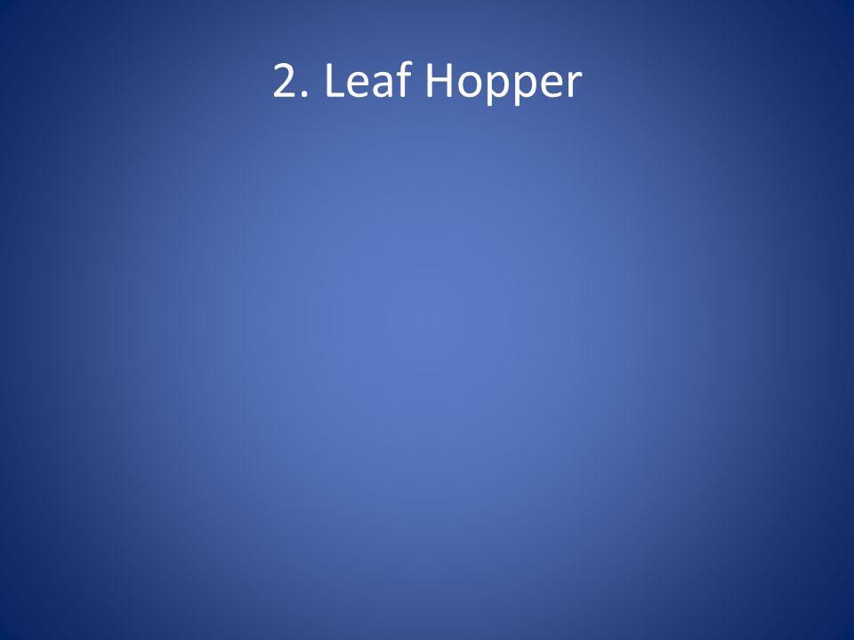 2. Leaf Hopper