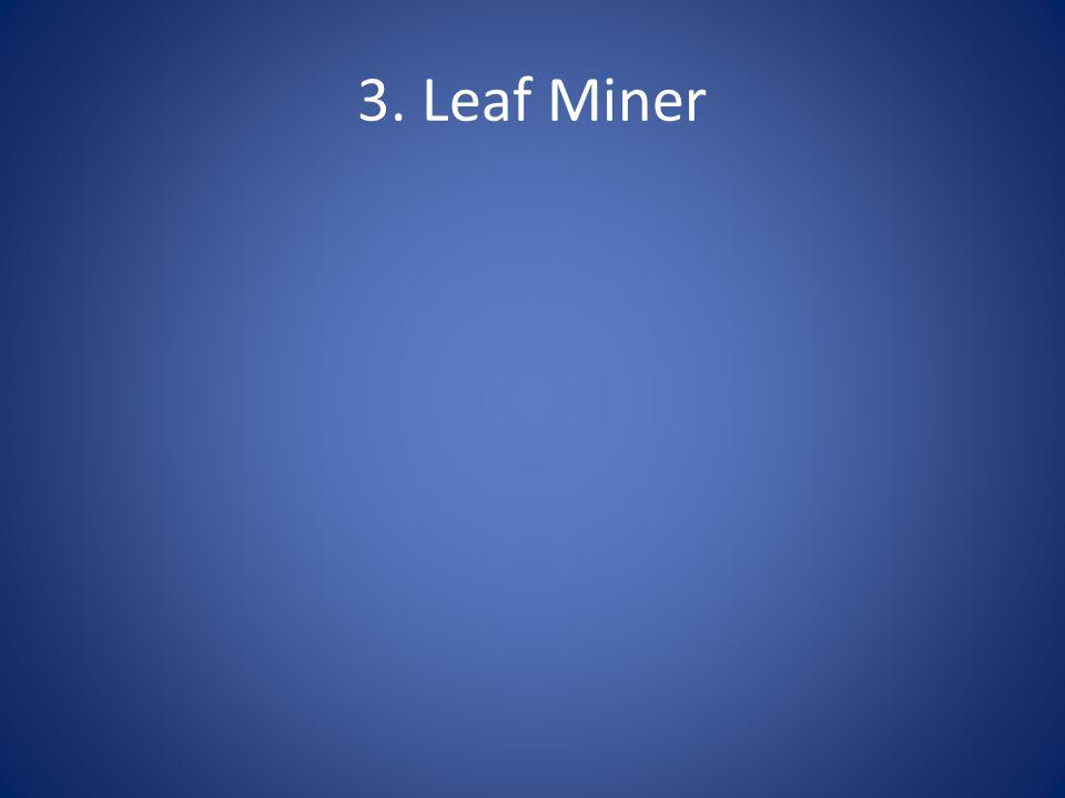 3. Leaf Miner