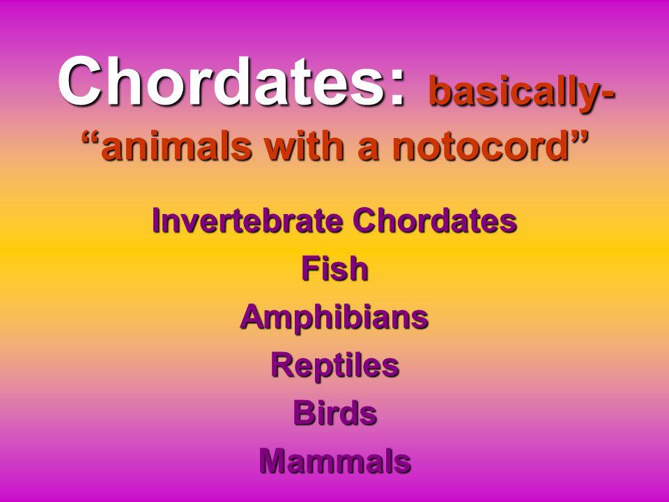 Chordates: basically- animals with a notocord Invertebrate Chordates FishAmphibiansReptilesBirdsMammals