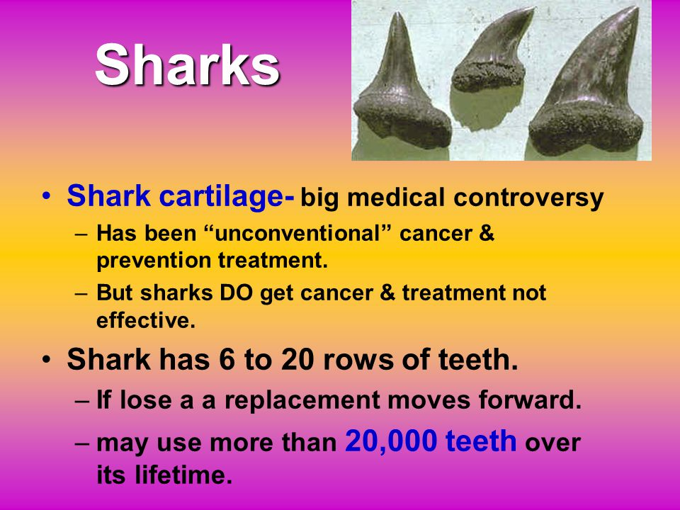 3. Cartilaginous Fish ChondrichthyesChondrichthyes ( sharks, rays & skates, ratfish ) www.linkandpinhobbies.com/dinotoys.htm www.mantarayinn.com wdfw.