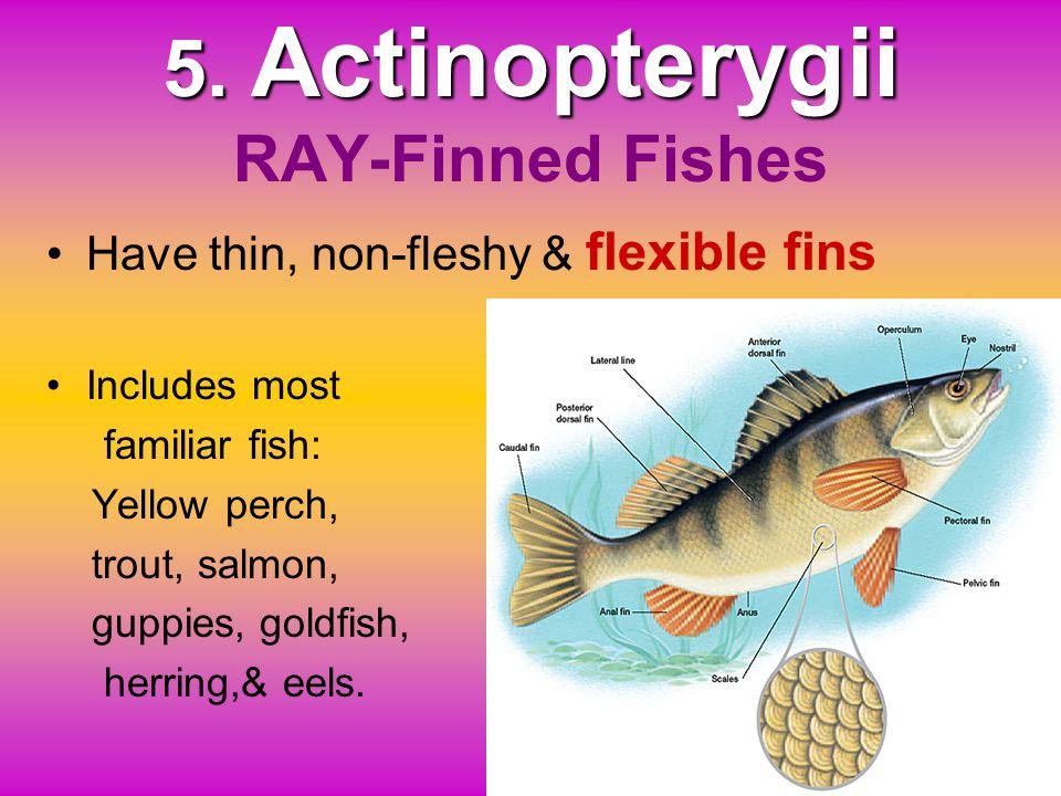 Evolution to first land vertebrates, theamphibians. Evolution to first land vertebrates, the amphibians. four-legged vertebratesRare, modern lobe-finn
