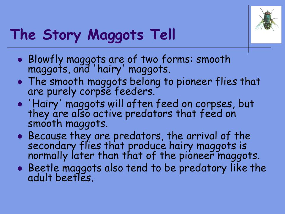 The Story Maggots Tell Blowfly maggots are of two forms: smooth maggots, and 'hairy' maggots. The smooth maggots belong to pioneer flies that are pure