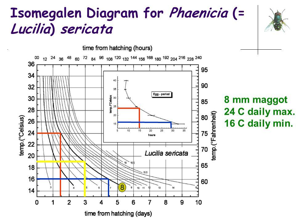 Isomegalen Diagram for Phaenicia (= Lucilia) sericata 8 mm maggot 24 C daily max. 16 C daily min. 8