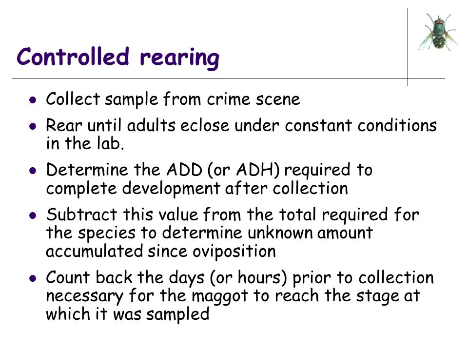 Controlled rearing Collect sample from crime scene Rear until adults eclose under constant conditions in the lab. Determine the ADD (or ADH) required