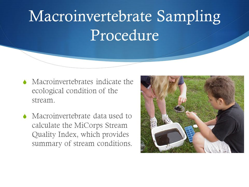 Macroinvertebrate Sampling Procedure  Macroinvertebrates indicate the ecological condition of the stream.