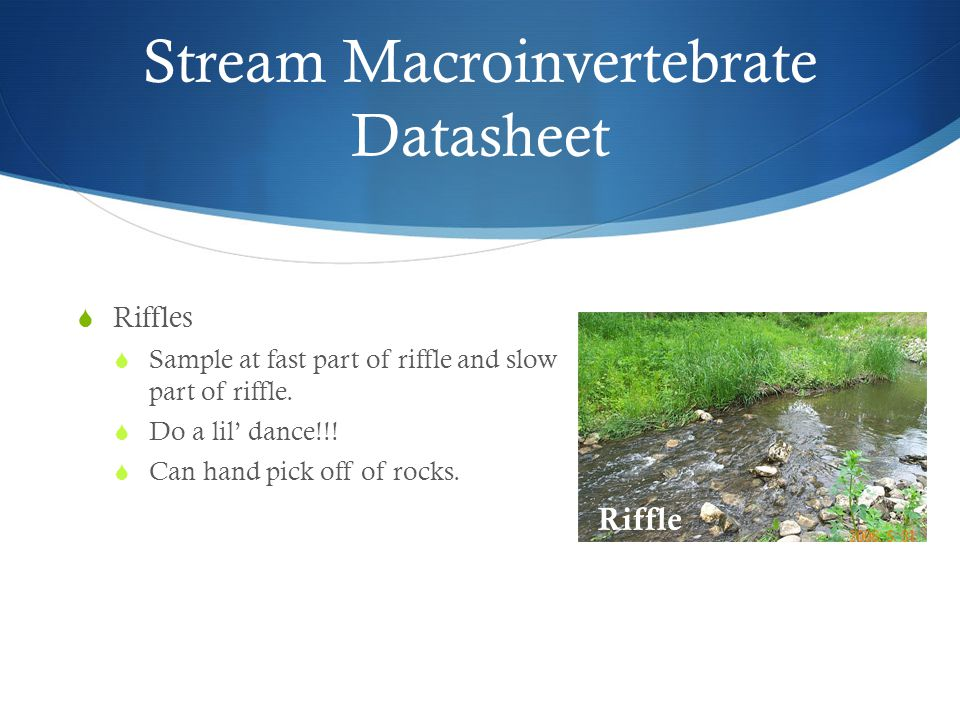 Stream Macroinvertebrate Datasheet  Riffles  Sample at fast part of riffle and slow part of riffle.