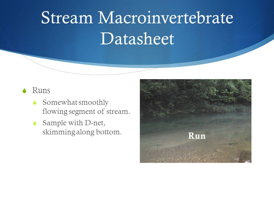 Stream Macroinvertebrate Datasheet  Runs  Somewhat smoothly flowing segment of stream.