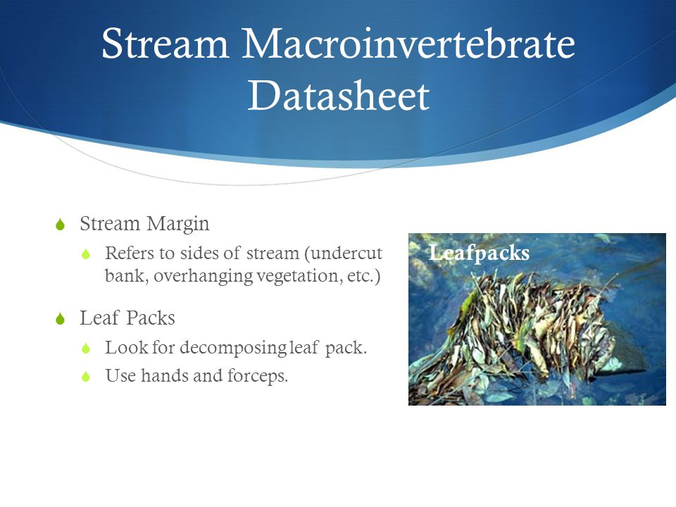 Stream Macroinvertebrate Datasheet  Stream Margin  Refers to sides of stream (undercut bank, overhanging vegetation, etc.)  Leaf Packs  Look for decomposing leaf pack.