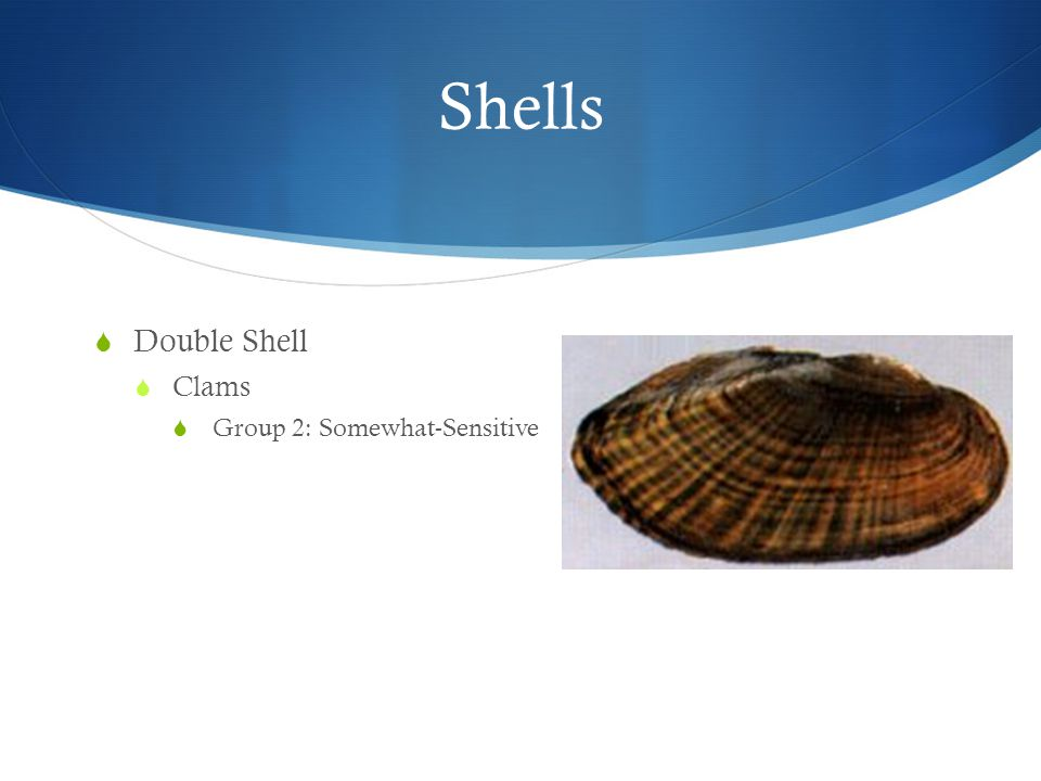 Shells  Double Shell  Clams  Group 2: Somewhat-Sensitive