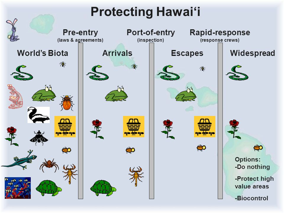 Pre-entry (laws & agreements) Port-of-entry (inspection) Rapid-response (response crews) Protecting Hawai'i World's BiotaArrivalsEscapes Options: -Do