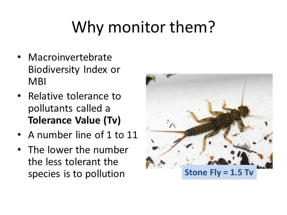 Why monitor them.