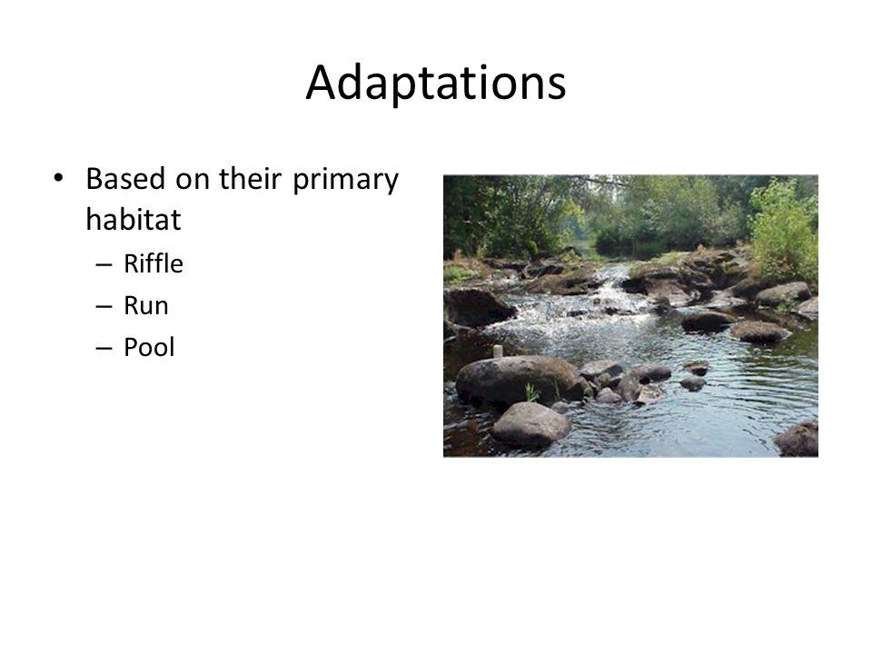 Adaptations Based on their primary habitat – Riffle – Run – Pool