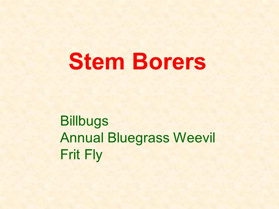 Billbugs Annual Bluegrass Weevil Frit Fly Stem Borers