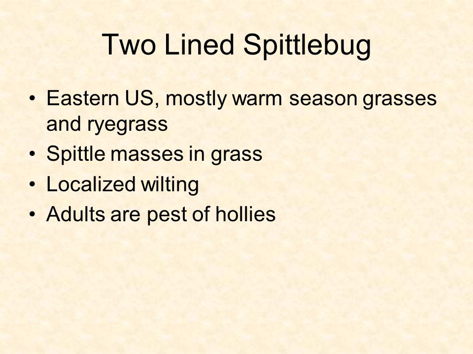 Two Lined Spittlebug Eastern US, mostly warm season grasses and ryegrass Spittle masses in grass Localized wilting Adults are pest of hollies