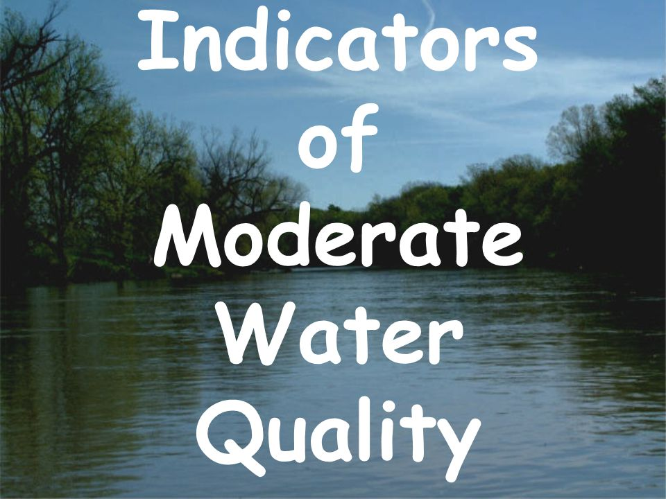 Indicators of Moderate Water Quality