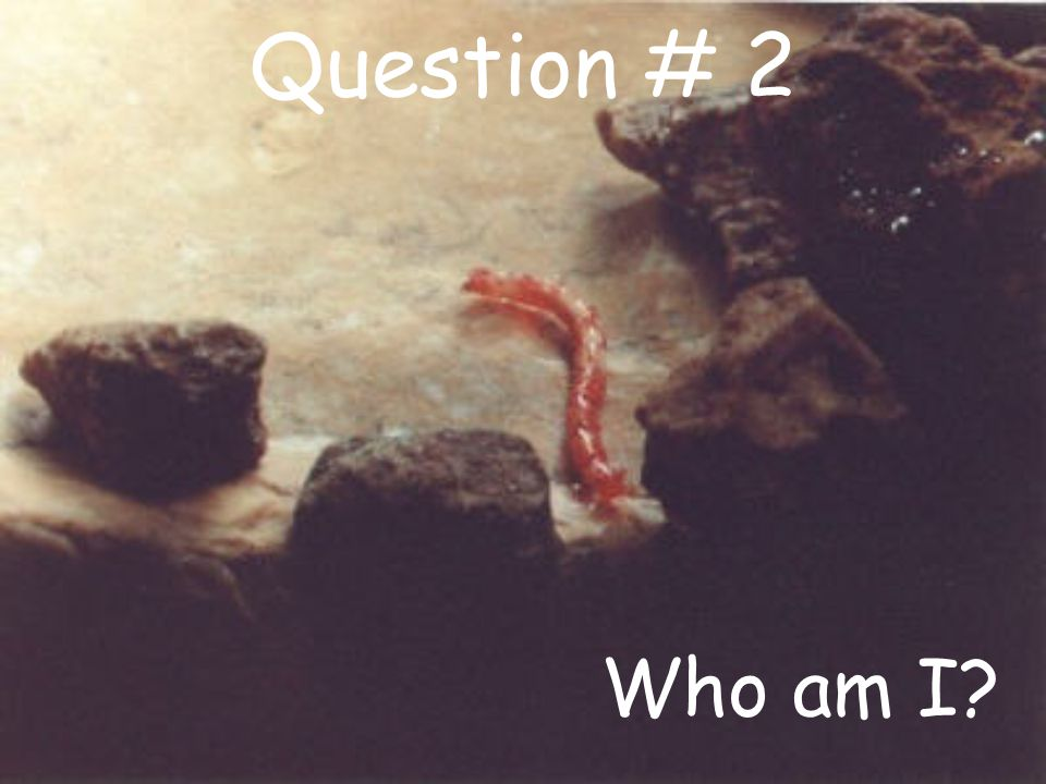 Question # 2 Who am I?