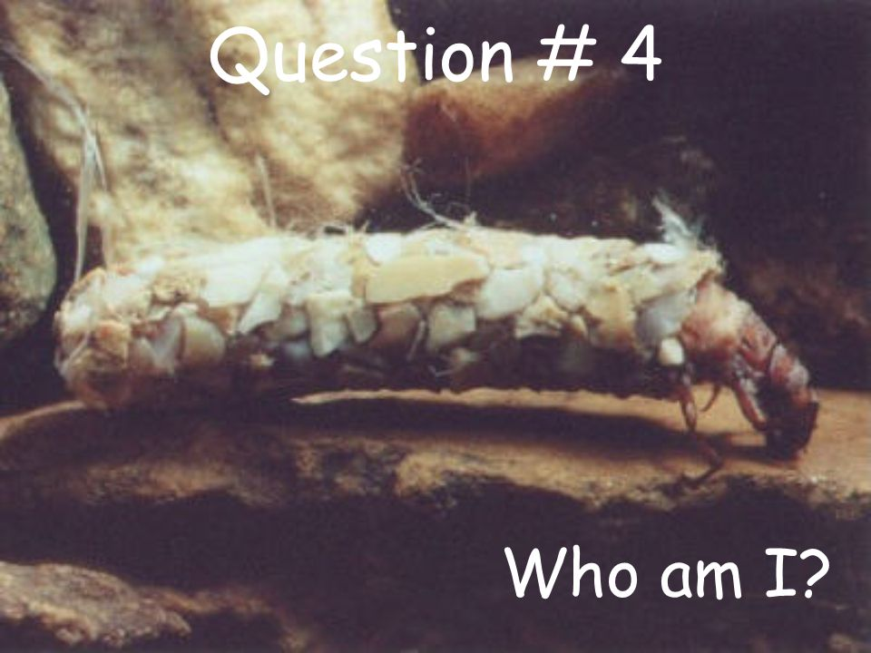 Question # 4 Who am I?