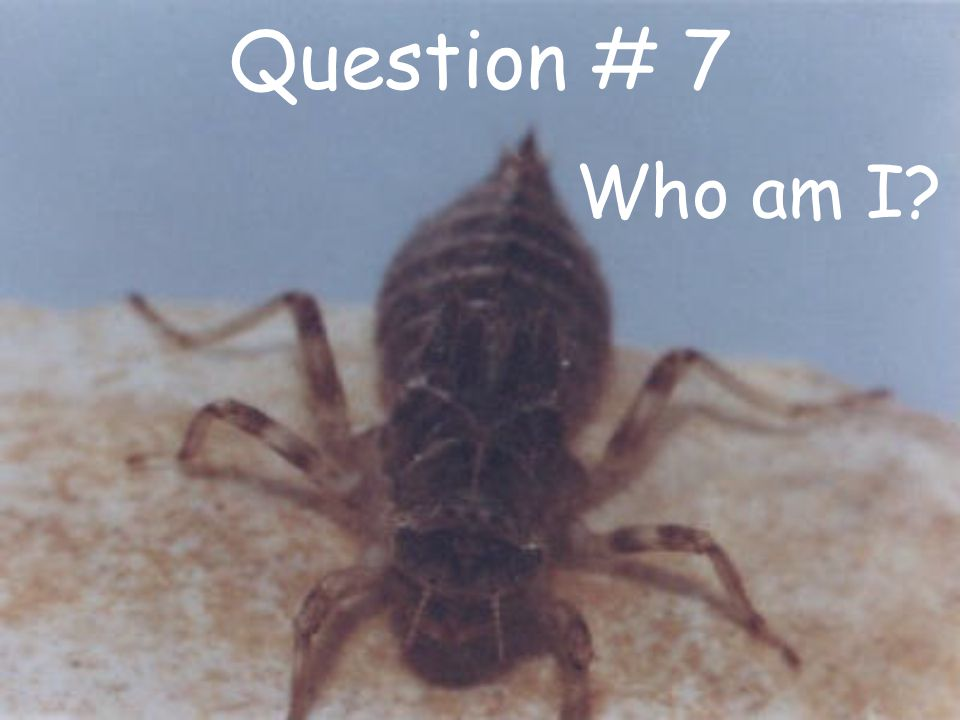 Question # 7 Who am I?