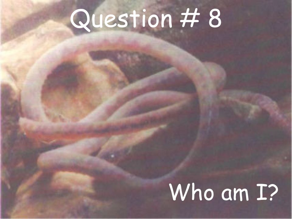 Question # 8 Who am I?