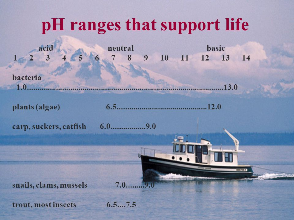 pH ranges that support life acid neutral basic 1 2 3 4 5 6 7 8 9 10 11 12 13 14 bacteria 1.0................................................................................................13.0 plants (algae) 6.5............................................12.0 carp, suckers, catfish 6.0.................9.0 snails, clams, mussels 7.0.........9.0 trout, most insects 6.5....7.5