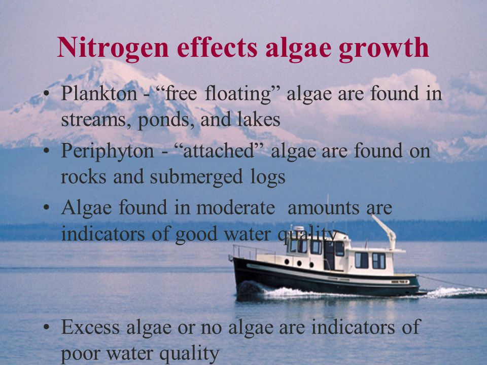 Nitrogen effects algae growth Plankton - free floating algae are found in streams, ponds, and lakes Periphyton - attached algae are found on rocks and submerged logs Algae found in moderate amounts are indicators of good water quality Excess algae or no algae are indicators of poor water quality