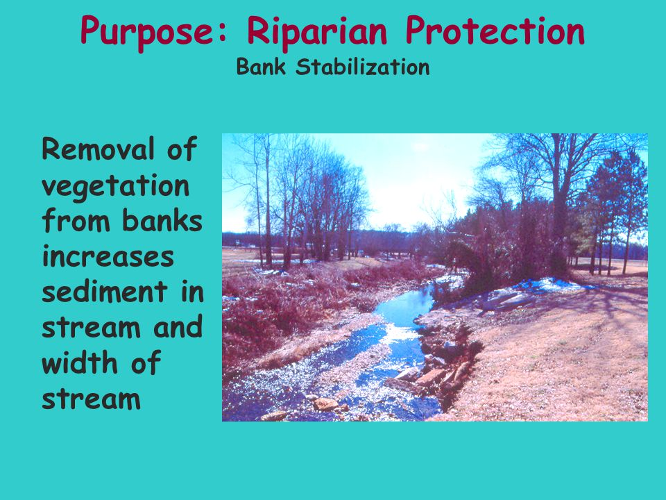 Purpose: Riparian Protection Removal of vegetation from banks increases sediment in stream and width of stream Bank Stabilization