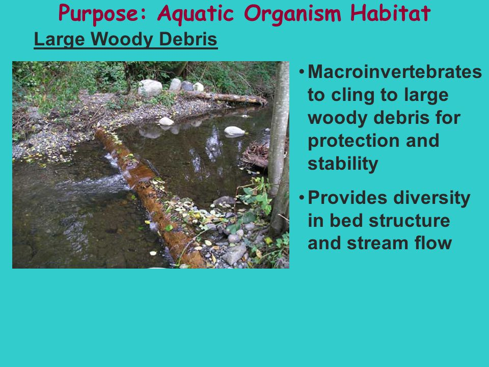 Purpose: Aquatic Organism Habitat Large Woody Debris Macroinvertebrates to cling to large woody debris for protection and stability Provides diversity in bed structure and stream flow