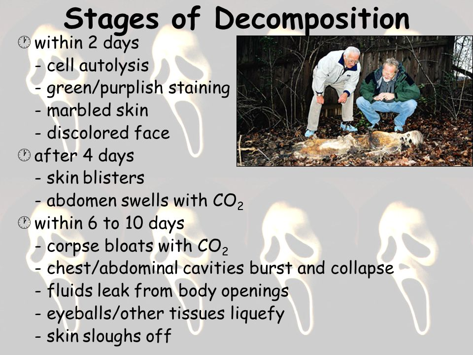 Stages of Decomposition  within 2 days - cell autolysis - green/purplish staining - marbled skin - discolored face  after 4 days - skin blisters - abdomen swells with CO 2  within 6 to 10 days - corpse bloats with CO 2 - chest/abdominal cavities burst and collapse - fluids leak from body openings - eyeballs/other tissues liquefy - skin sloughs off