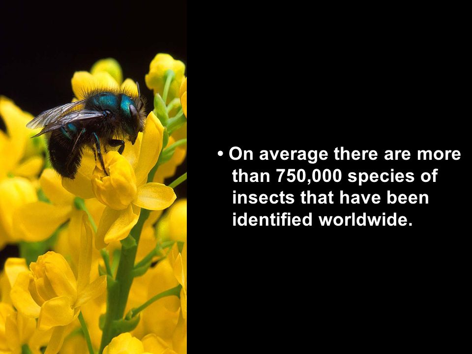 On average there are more than 750,000 species of insects that have been identified worldwide.