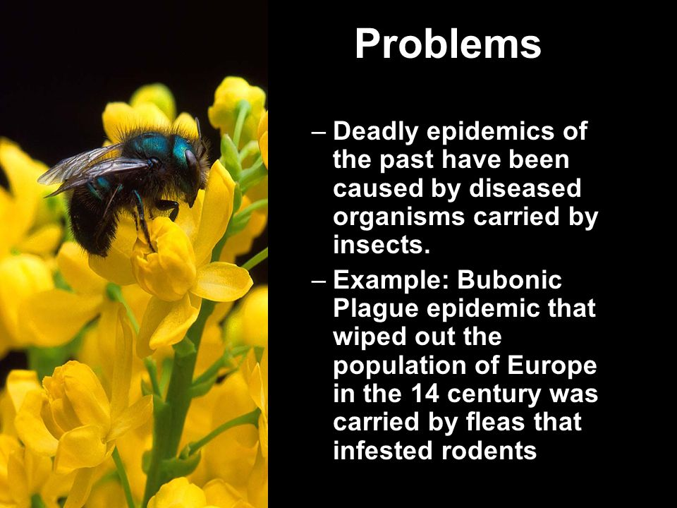 Problems –Deadly epidemics of the past have been caused by diseased organisms carried by insects.