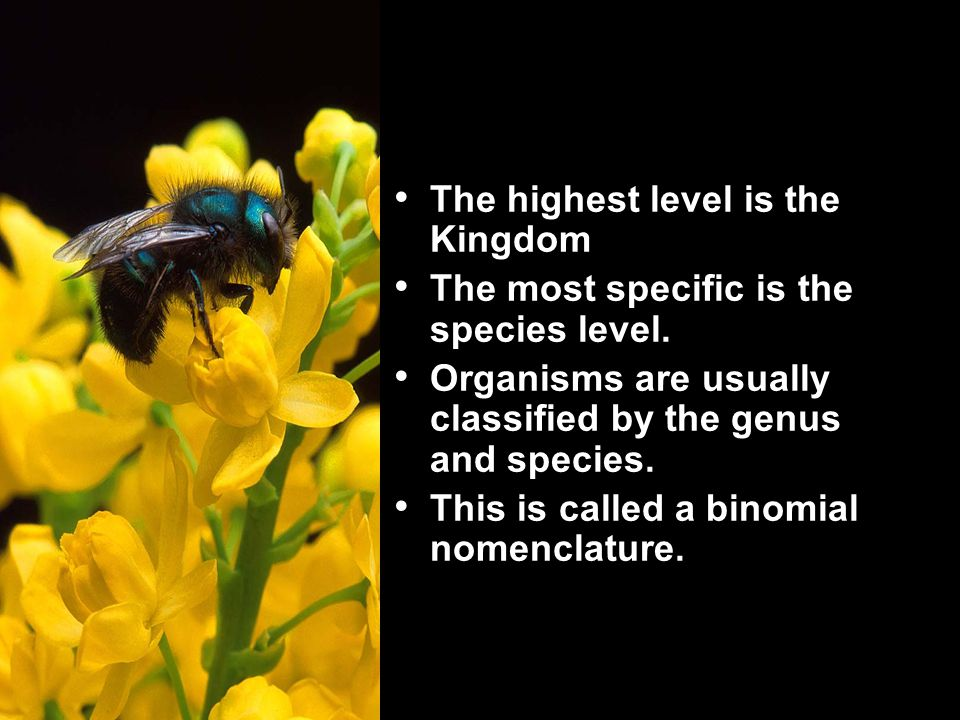 The highest level is the Kingdom The most specific is the species level.