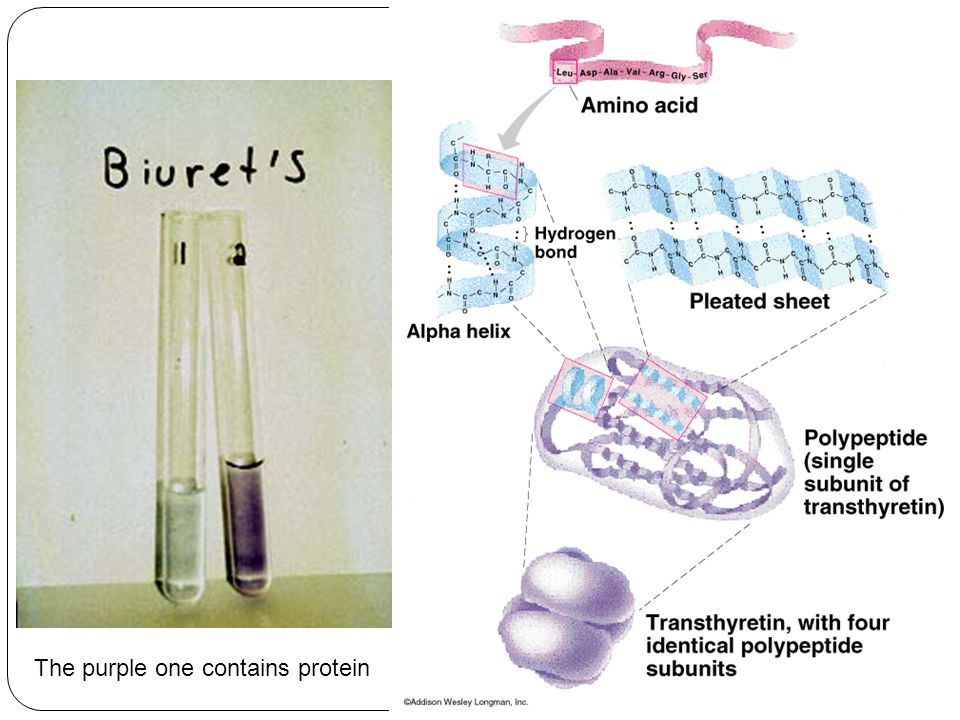 The purple one contains protein