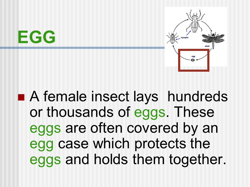 QUESTION #2 How many stages are there in an incomplete metamorphosis? Answer: 3