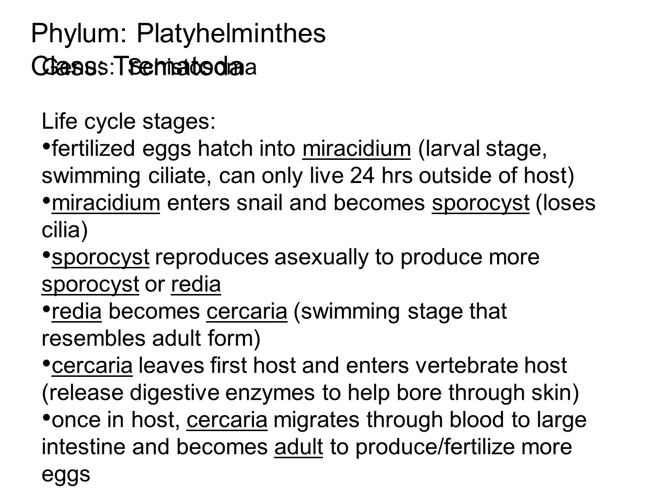 Phylum: Platyhelminthes Class: Trematoda Genus: Schistosoma Life cycle stages: fertilized eggs hatch into miracidium (larval stage, swimming ciliate, can only live 24 hrs outside of host) miracidium enters snail and becomes sporocyst (loses cilia) sporocyst reproduces asexually to produce more sporocyst or redia redia becomes cercaria (swimming stage that resembles adult form) cercaria leaves first host and enters vertebrate host (release digestive enzymes to help bore through skin) once in host, cercaria migrates through blood to large intestine and becomes adult to produce/fertilize more eggs