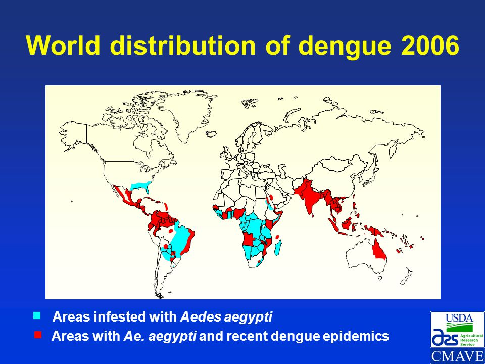 Dengue/DHF cases reported to the World Health Organization 1955-2005* * Source: WHO, Sep.