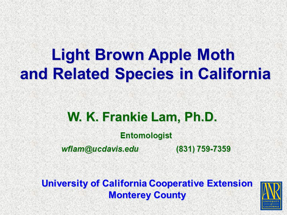 Other Leafroller Moths in California Apple Pandemis, Pandemis pyrusana 2 - 3 generations per year 2 - 3 generations per year Larvae are greenish yellow with straw-colored head Larvae are greenish yellow with straw-colored head Adults are light brown to rusty color with bands on the Adults are light brown to rusty color with bands on the front wings front wings UC IPM Guidelines: Apple and caneberries UC IPM Guidelines: Apple and caneberries http://www.ipm.ucdavis.edu http://www.ipm.ucdavis.edu