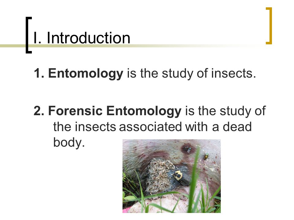 I. Introduction 1. Entomology is the study of insects. 2. Forensic Entomology is the study of the insects associated with a dead body.