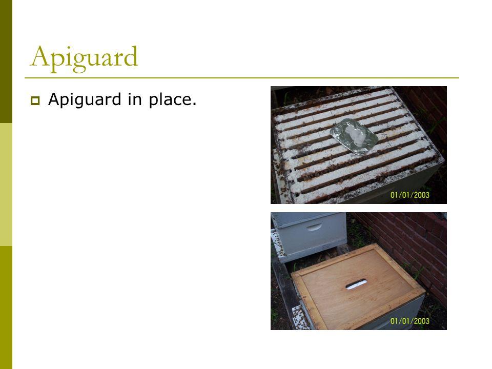 Apiguard  Apiguard in place.