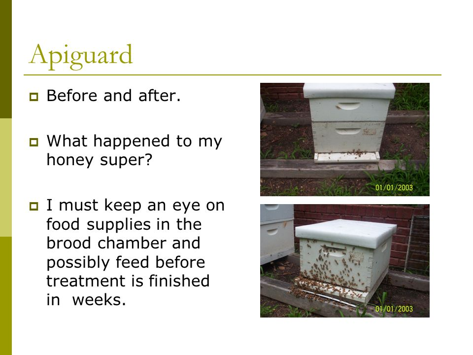 Apiguard  Before and after.  What happened to my honey super?  I must keep an eye on food supplies in the brood chamber and possibly feed before tr