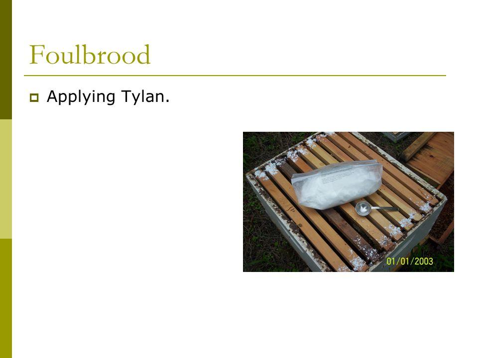 Foulbrood  Applying Tylan.