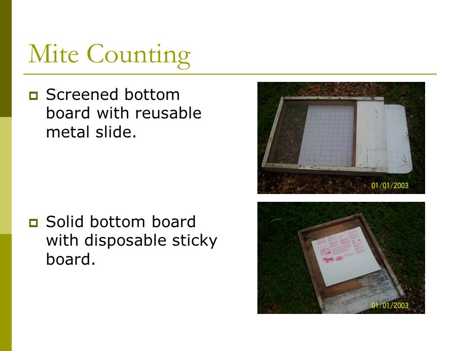 Mite Counting  Screened bottom board with reusable metal slide.  Solid bottom board with disposable sticky board.