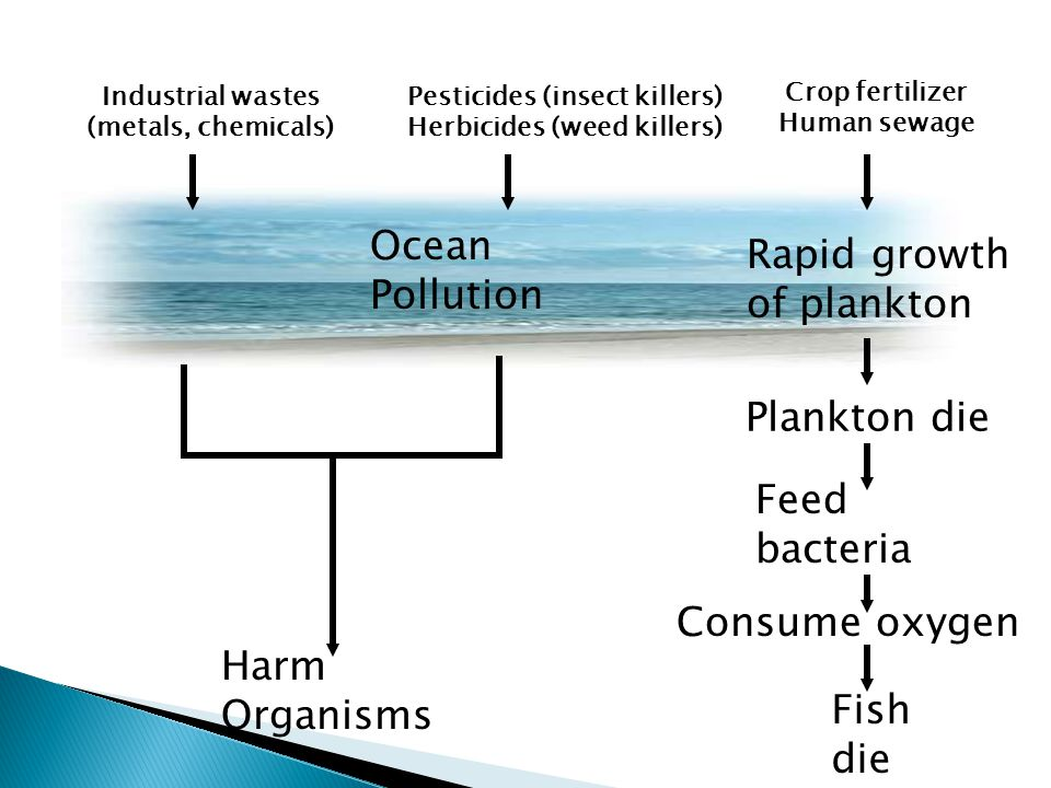 Industrial wastes (metals, chemicals) Pesticides (insect killers) Herbicides (weed killers) Crop fertilizer Human sewage Ocean Pollution Plankton die