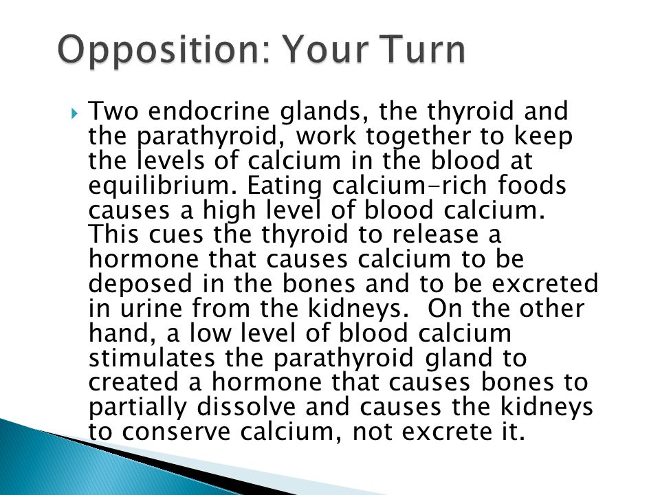  Two endocrine glands, the thyroid and the parathyroid, work together to keep the levels of calcium in the blood at equilibrium. Eating calcium-rich